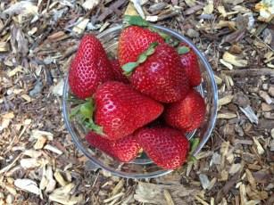 Seascape_strawberries