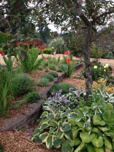 front_perennial_bed