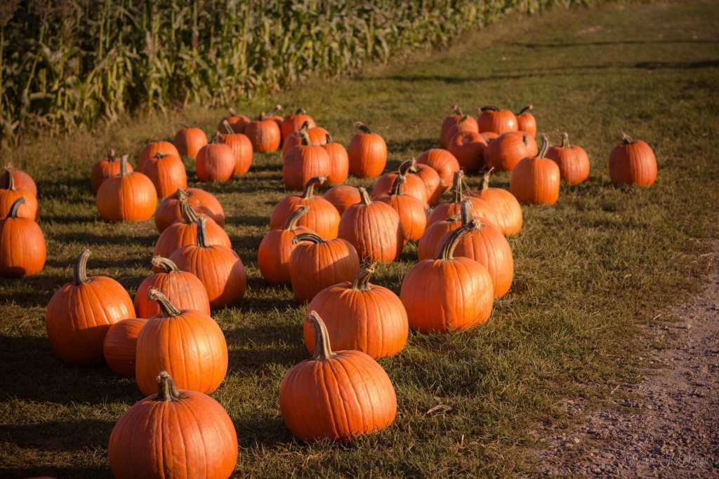 Get your bucket lists ready with this fun list of 15 things to do for fall including visiting a pumpkin patch and carving pumpkins.