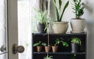 7 Easy to Care for Indoor Beginner Plants