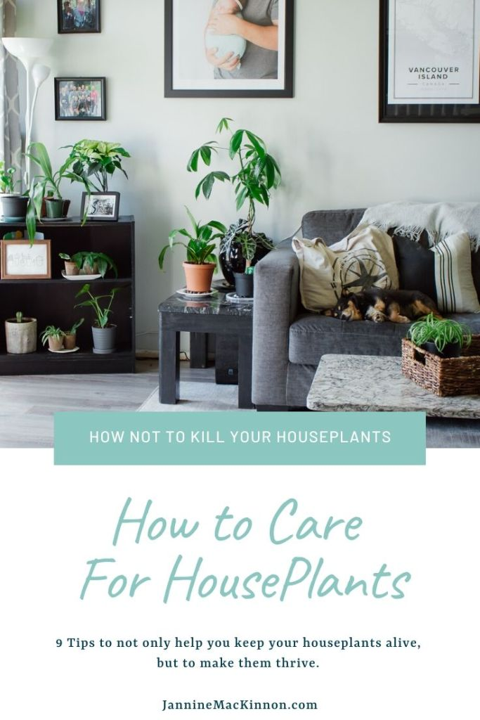 9 Tips for keeping your indoor plants alive. Even if you suck at plants, your tropical plants will thrive with these simple tips.