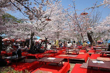 Maruyama Park, Kyoto - temporary outdoor restaurant