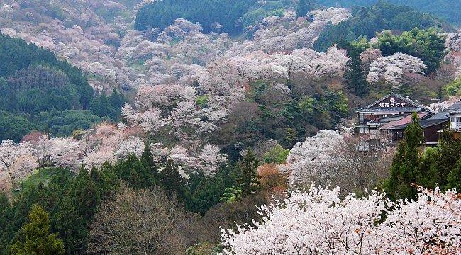 Source: www.japan-guide.com