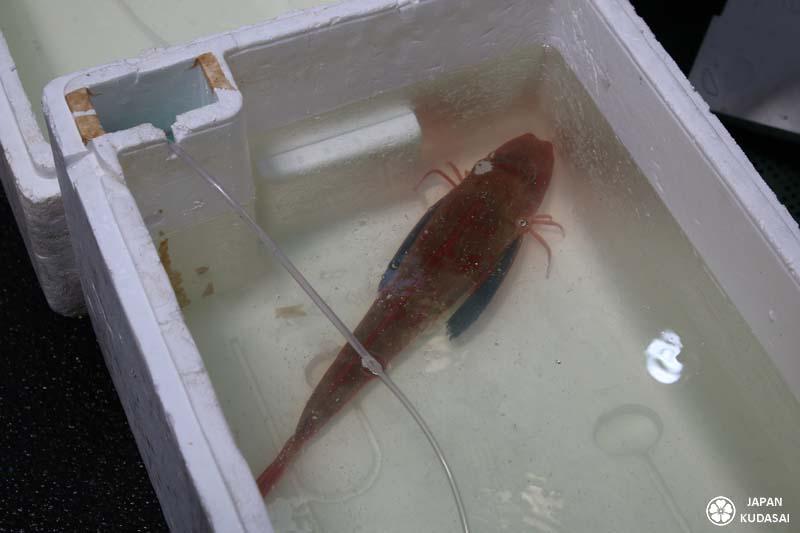 tsukiji-poisson