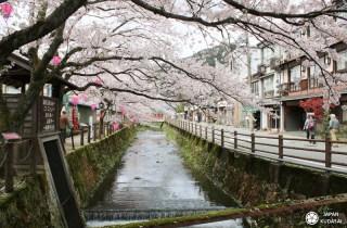 Kinosaki onsen : l'art du bain sous les cerisiers