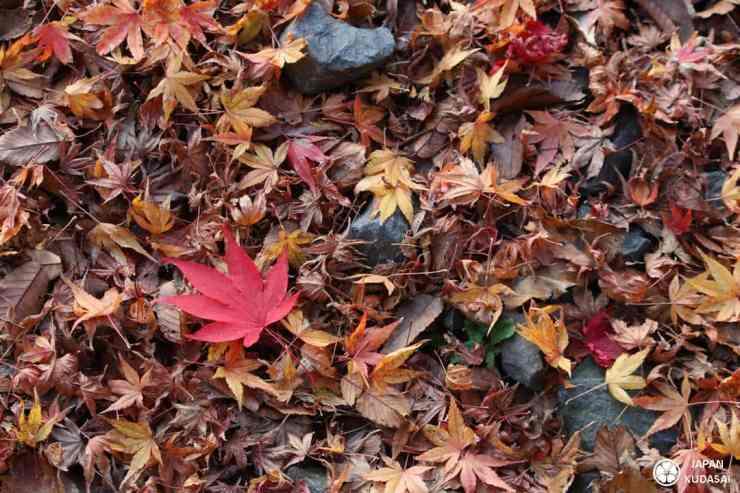 Premier bilan de Japan kudasai sur ce blog trip dans les préfectures de Hyogo, Tottori et Kyoto.