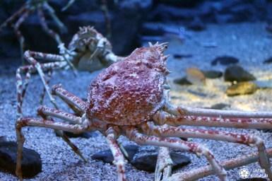 Aquarium-osaka-kaiyukan-04