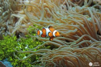 Aquarium-osaka-kaiyukan-13