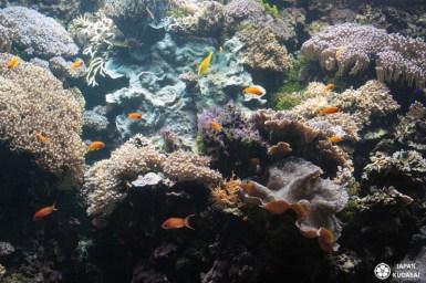 Aquarium-osaka-kaiyukan-15