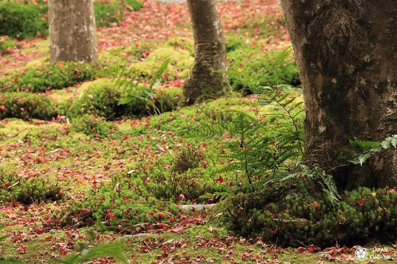 Giou-ji-arashiyama-kyoto (6)