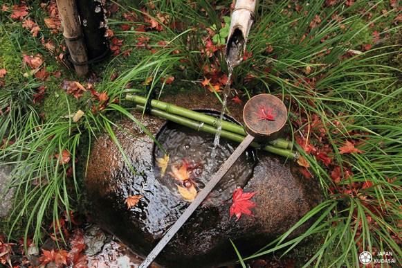 fontaine japonaise bambou eau automne feuilles d'érables