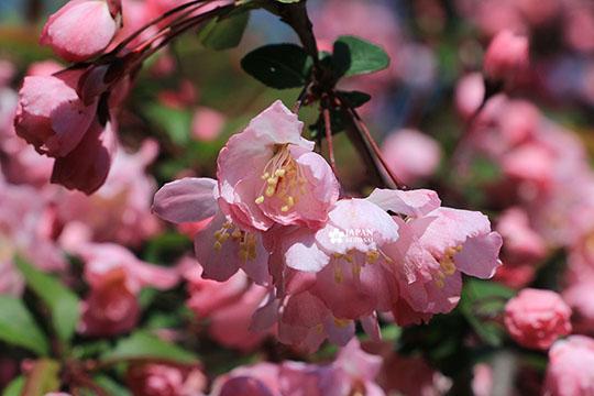focus sakura printemps shinjuku gyoen