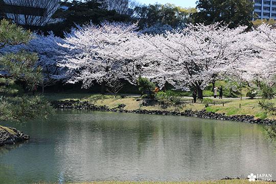 Jardin Kyu-Shiba-rykyu garden de Tokyo (9)