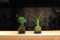 Ateliers ikebana et kokedama à Dijon