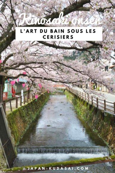Onsen et cerisiers, bienvenue à Kinosaki onsen