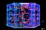 Instant poétique à l'expo Art aquarium
