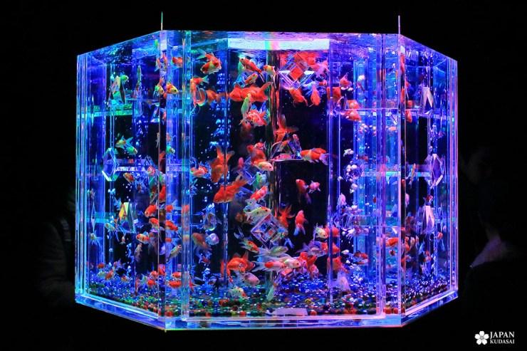 aquarium poisson art aquarium japon