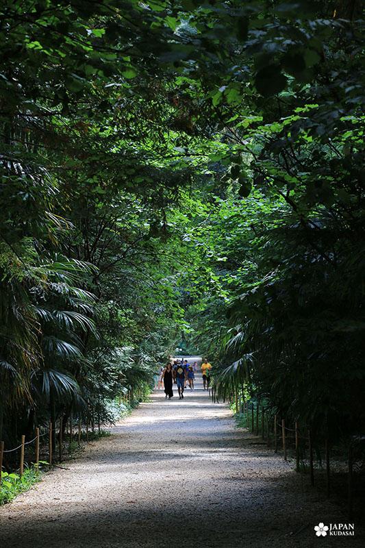 bambouseraie-en-cevennes (38)
