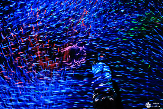 expo-teamlab-paris (19)