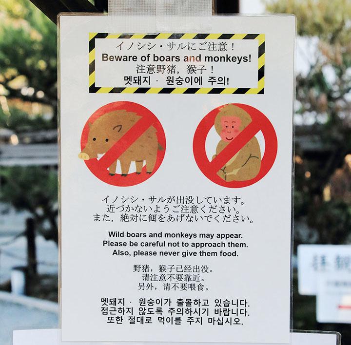 warning sanglier et macaques japonais