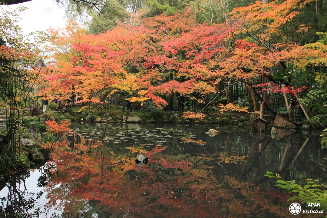 Les parcs de Kyoto ont des couleurs magnifiques avec les érables à l'automne : à mettre sur une to do list lors d'un voyage au Japon pour un circuit