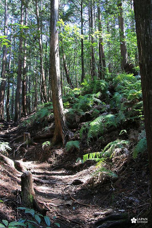 sentier nakahechi wakayama