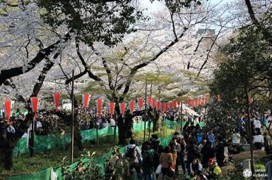 voyage-printemps-japon (12)