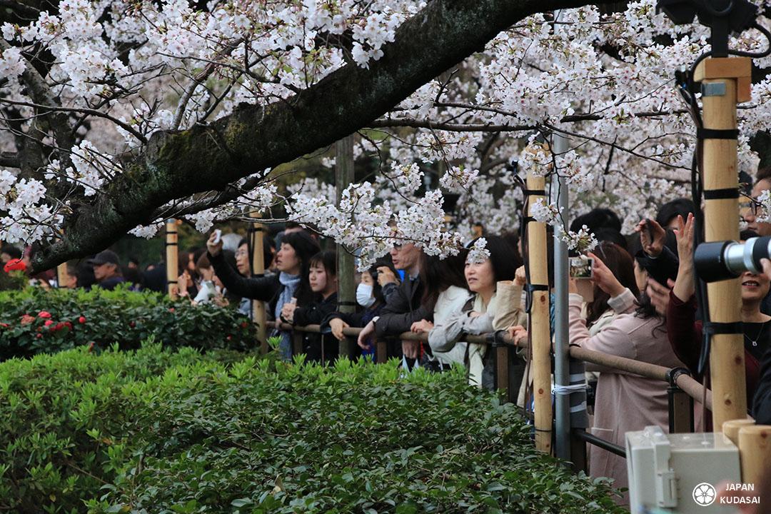 devant les douves de chidorigafuchi a tokyo