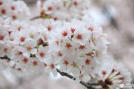 Bilan : séjour de 3 semaines au Japon ce printemps !