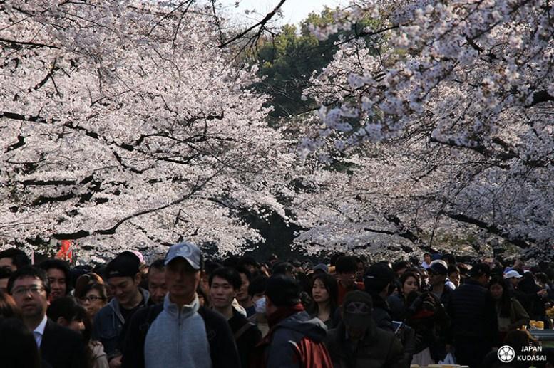parc ueno sous les cerisiers en fin d'après-midi