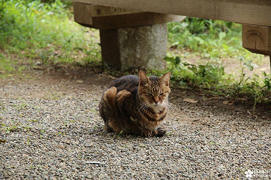 chat au japon