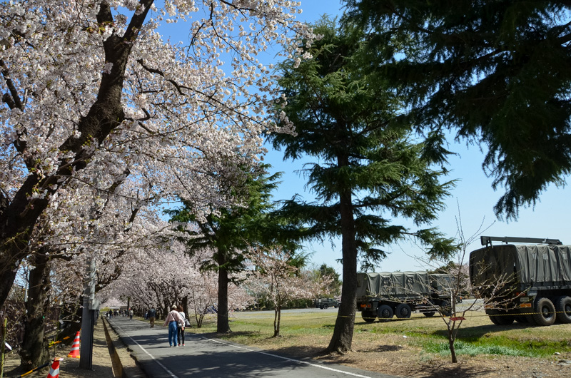 Shinmachi Cherry Blossom Festival