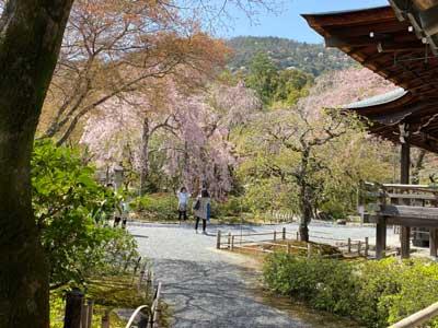 Heian Jingu | Kyoto Travel Guide
