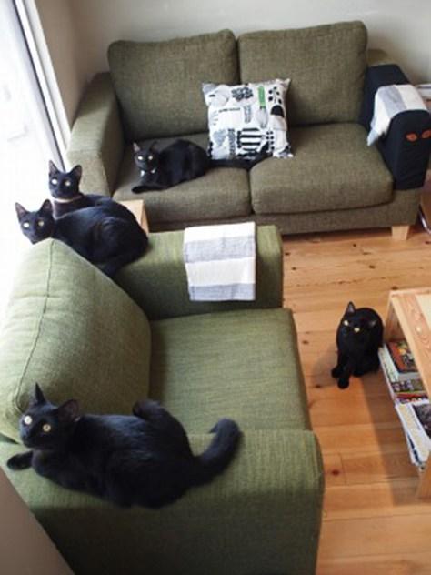Black cat cafe 1