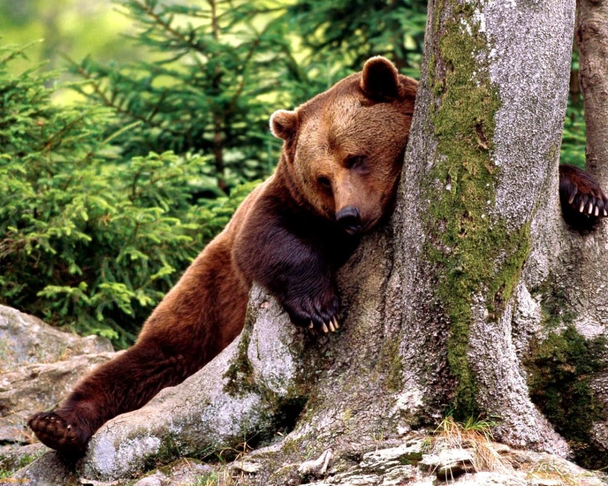 Bear Lingerie? Only In Japan!