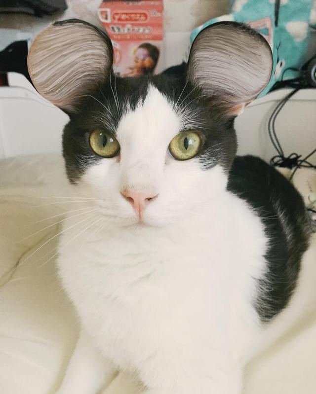 cat_mouse_ears 1
