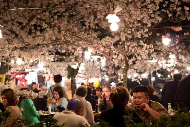 Hanami i Maruyamaparken i Kyoto
