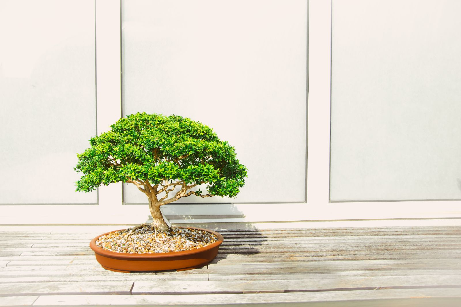 Simple bonsai