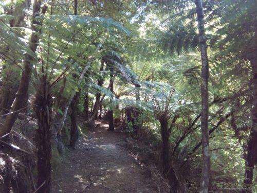 グレートバリア島Millers hill