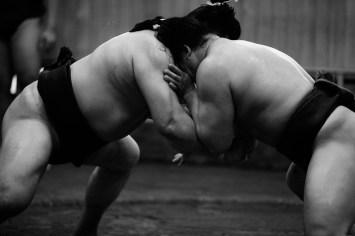 ALF_8489_sumo-small
