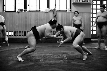 ALF_8585_sumo-small
