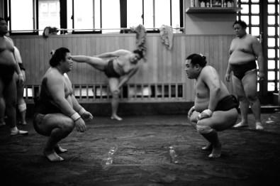 ALF_8608_sumo-small