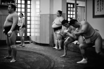 ALF_8619_sumo-small