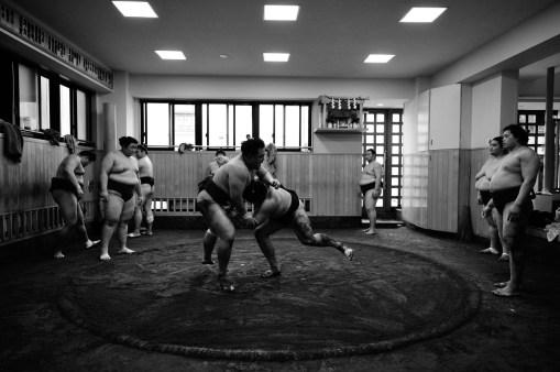 ALF_8632_sumo-small