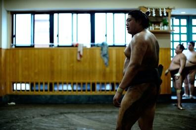 ALF_8716_sumo-small