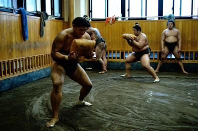 ALF_8730_sumo-small