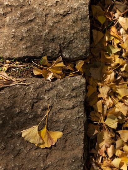 AG-Hasselblad-tokoyo-photowalks_9339639