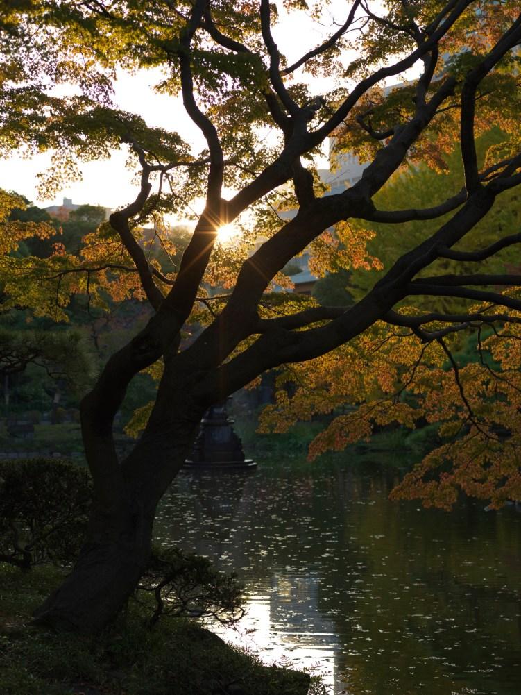 AG-Hasselblad-tokoyo-photowalks_9339688
