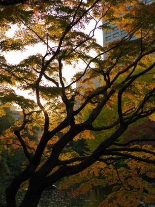 AG-Hasselblad-tokoyo-photowalks_9339690