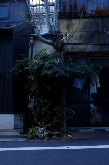 tokyo-photowalks-nethertokyo__DSF4006